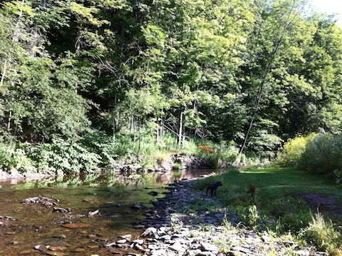 """Ballantine Park, Laura Josepher: """"Although I've had my home in Andes for 6 years, last week was the first time I visited this little gem of a park.  My dog and I enjoy walking on its mowed paths, sitting on its stone benches, and wading through the stream."""""""