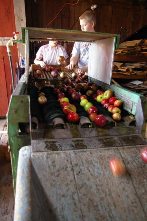 Apples destined for the cider press at the Hubbell homestead: Julia Reischel